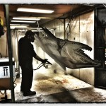 Ray Troll, Ship Creek Hatchery Project
